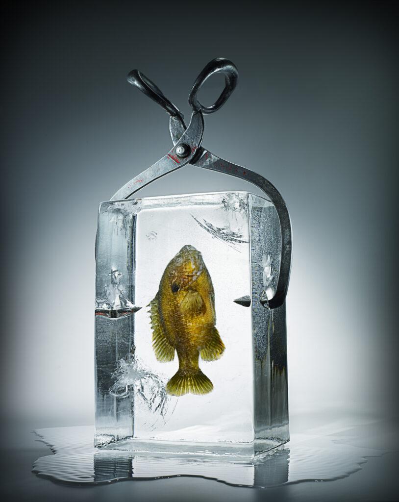 Zamrznjene ribe, frozen fish