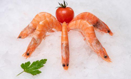 Kozice, shrimps